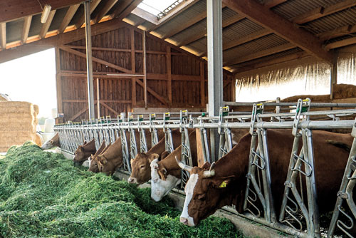 gospodarstwo rolne - obora